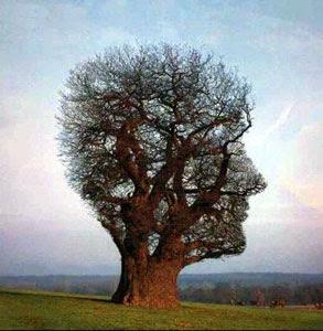 La source dans Partages et Enseignements arbre_connaissance