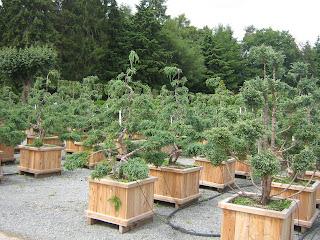 bruns pflanzen facebook