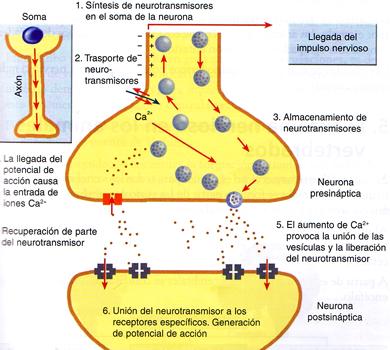 que producen los esteroides anabolicos