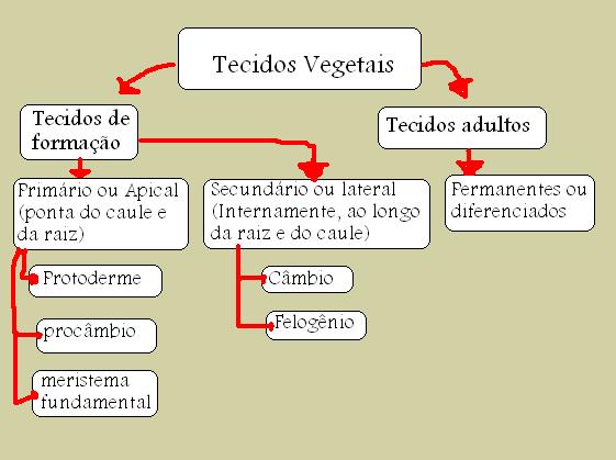 Histologia Das Angiospermas Anatomia Vegetal