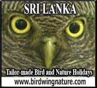Sri Lanka Bird and Nature Holidays with Amila Salgado