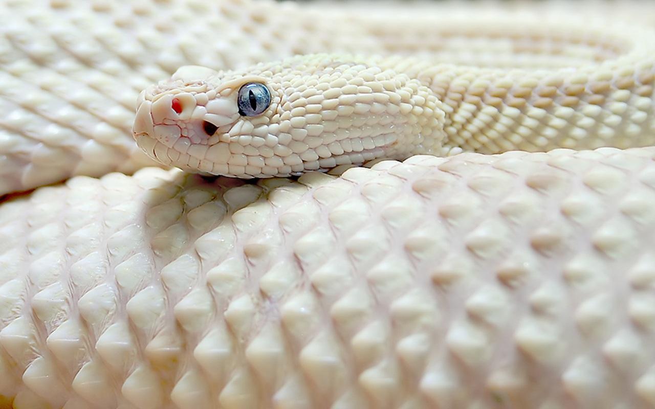 snake - photo #36