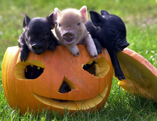 Creative Writing: The Story Of The Three Little Pigs