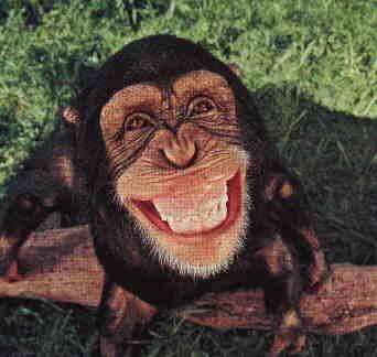gulen_maymun.jpg