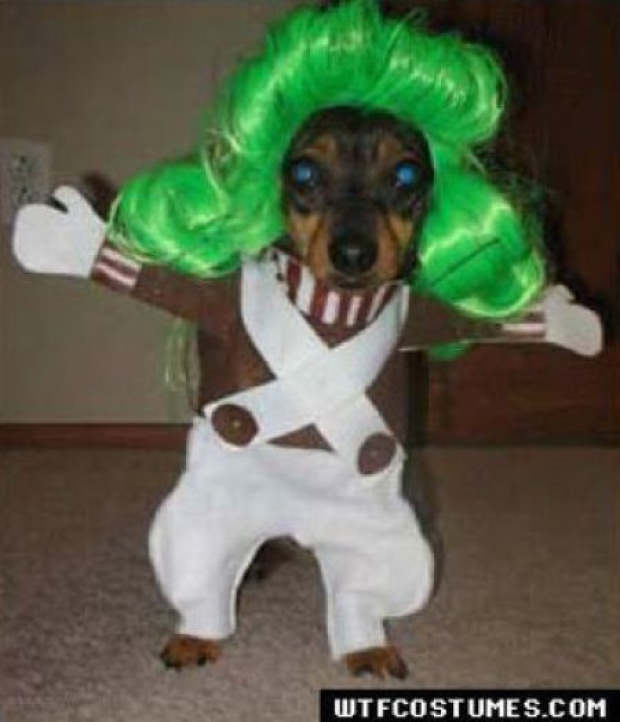 Animals, Dogs, Halloween Costumes, Loompa Dog, Pet, Oompa ...