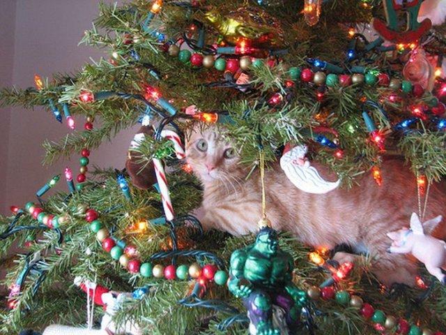 Cats On Christmas Trees - 19 Pics