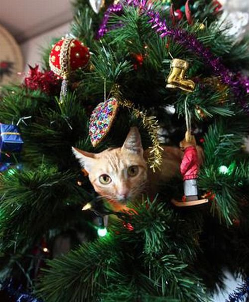 Are Christmas Trees Bad For Cats: Cats On Christmas Trees - 19 Pics