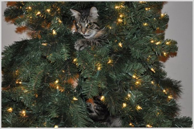 Cats On Christmas Trees 19 Pics Curious Funny Photos