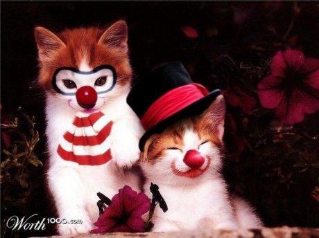 Animals clowns - Photoshopped