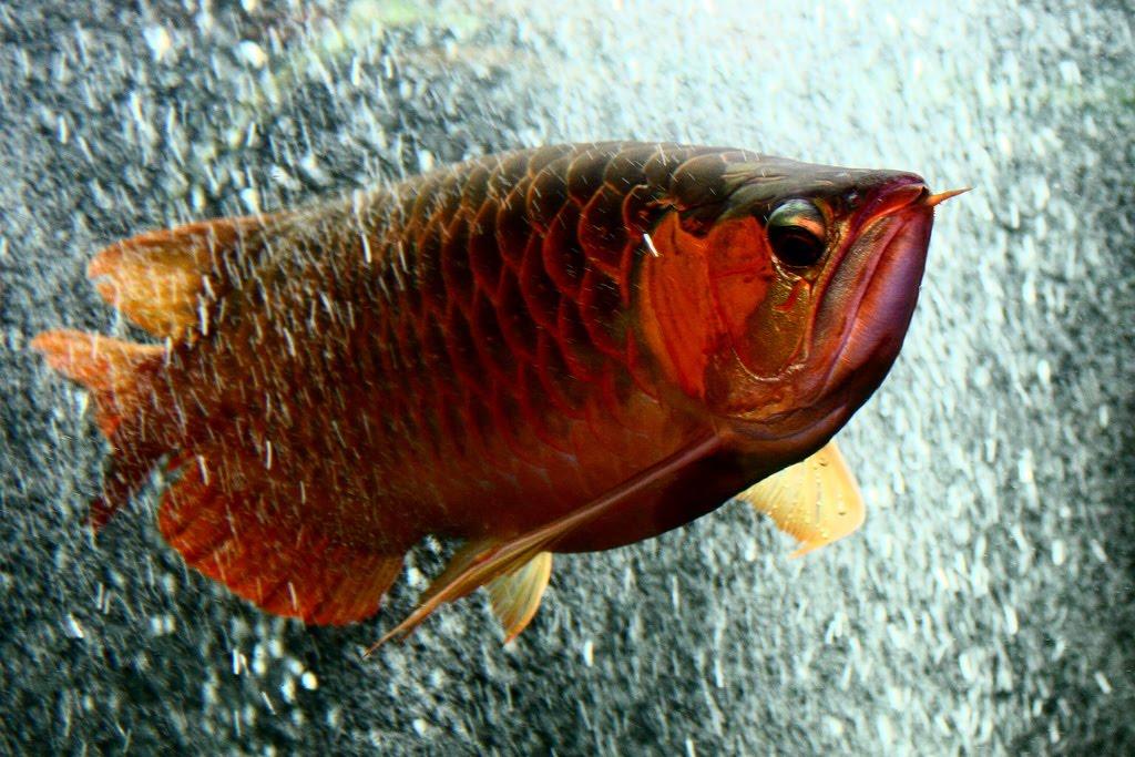Fish of    Exotic Tropical Ornamental Fish Photos With Names   Fish