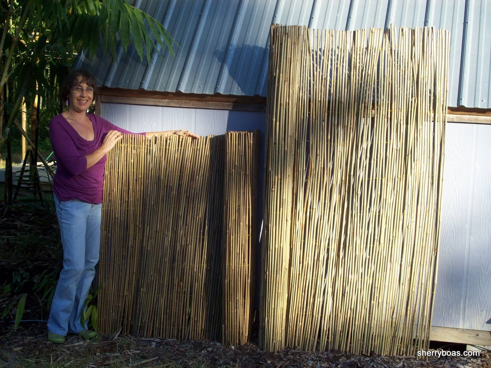 Beautiful Bamboo Two Different Sizes Of Bamboo Fencing