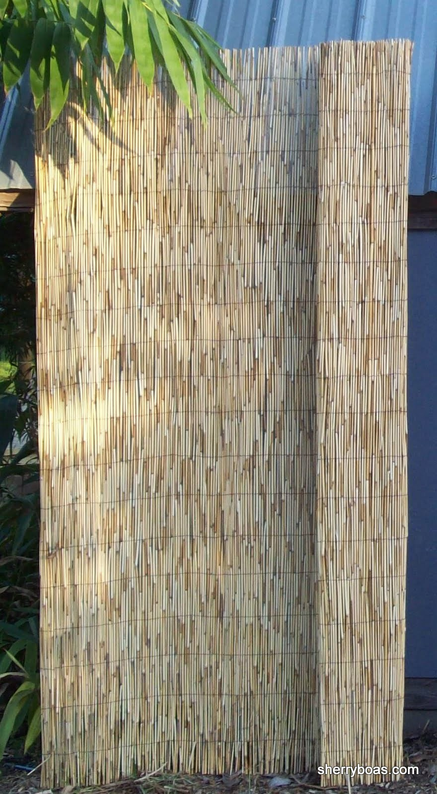 Beautiful Bamboo Photos Of Reed Fencing