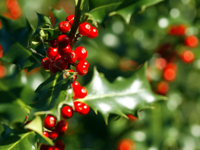 Banging The Drum The Holly And The Ivy And Mistletoe Too