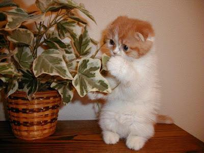 http://clickherecoolstuff.blogspot.com
