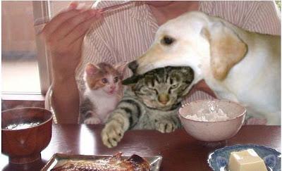 http://clickherecoolstuff.blogspot.com/