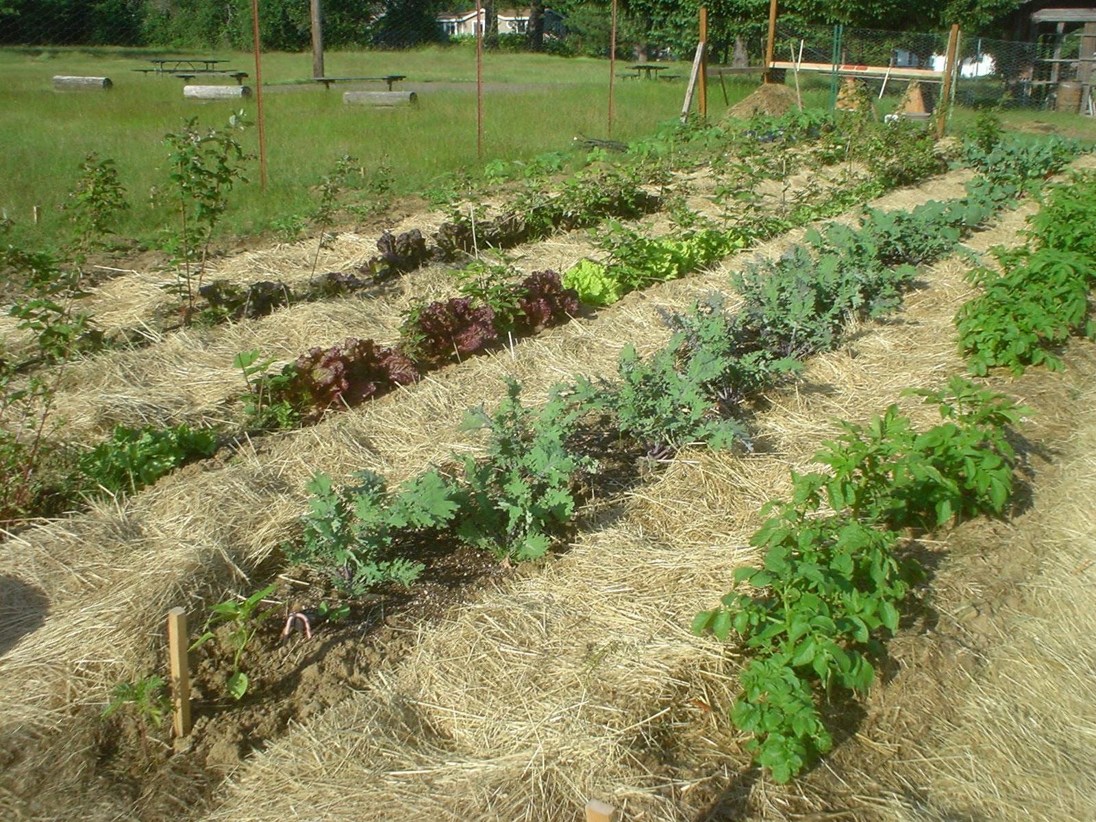 deep mulch gardening, the sharing gardens : the benefits of deep mulching, Design ideen