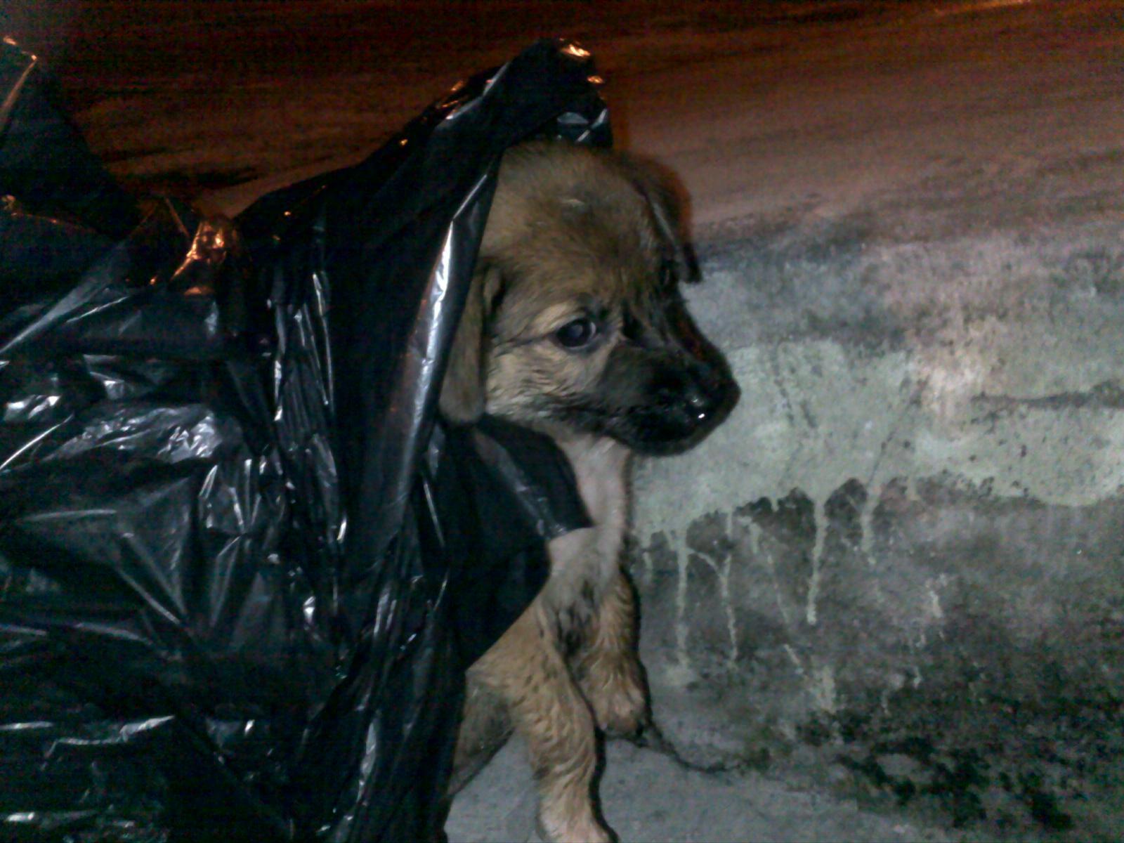 Anak Anjing Terperangkap Di Longkang Rumah Papa Hero
