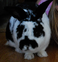 Rabbits Are Good Pets :: A Persuasive Essay