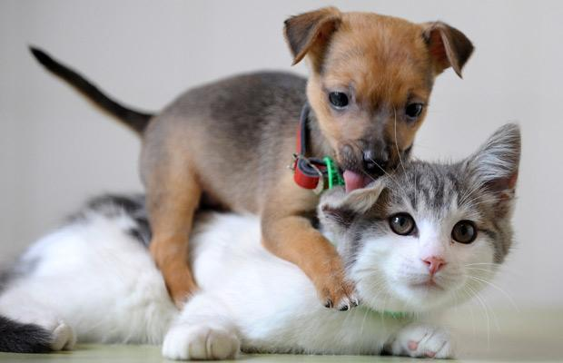 kitty and puppy - Cães e gatos são amigos ou inimigos?