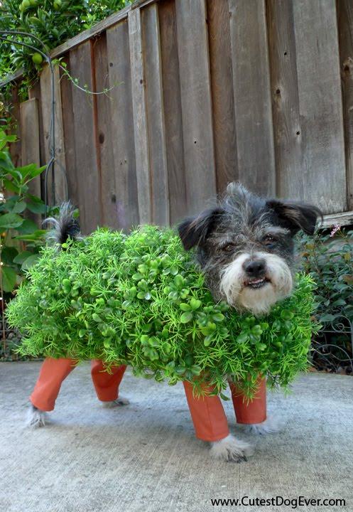 Chia Pet Doggie Costume by Kitai