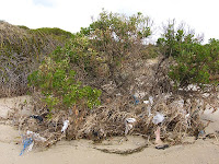 Garbage grows on trees, Ralphs Bay - 14th August 2008