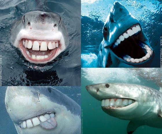 Shark Week: Watch a Shark Tear a Man In Half - IGN |Half Human Half Shark