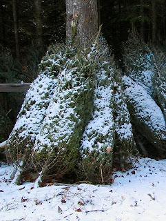 Petit Debutant: DIY Christmas Tree preservative
