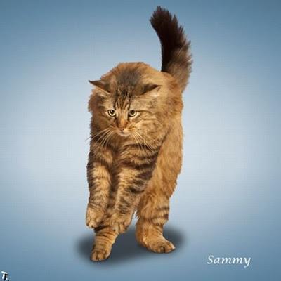 Yoga de gatos