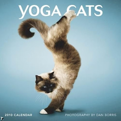 Yoga de gatos