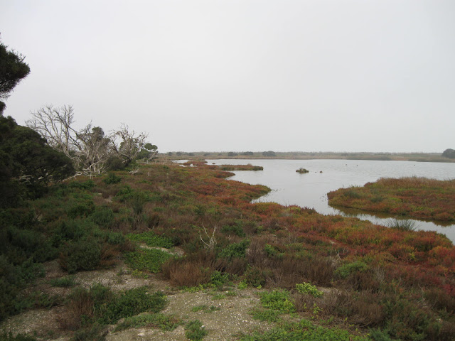 [OBP+habitat.jpg]