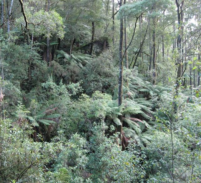 [Rainforest+in+the+Otways+Near+Kenneth+River.jpg]
