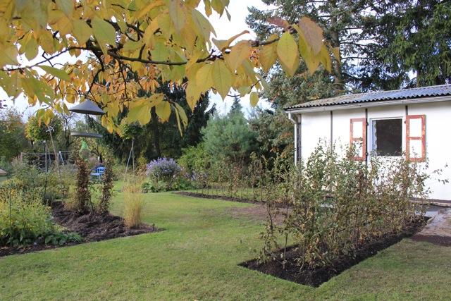 gartengl ck im wandelgarten anleitung zum pflanzen einer hainbuchenhecke. Black Bedroom Furniture Sets. Home Design Ideas