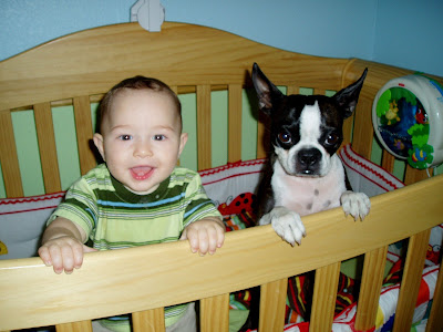 Boston Terrie dog with cute child