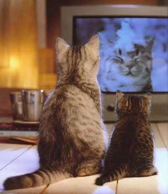 Hasta el gato ve mucha televisión