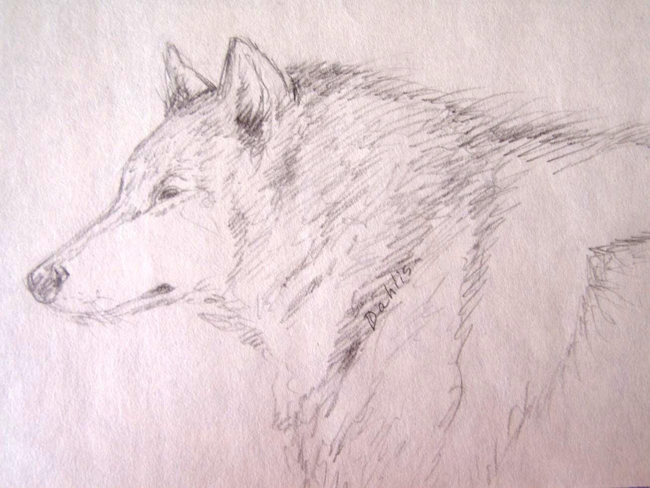 blue star sirius the wolf - photo #4