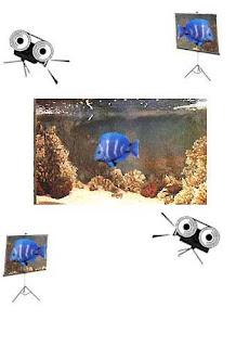 bohm, esempio acquario