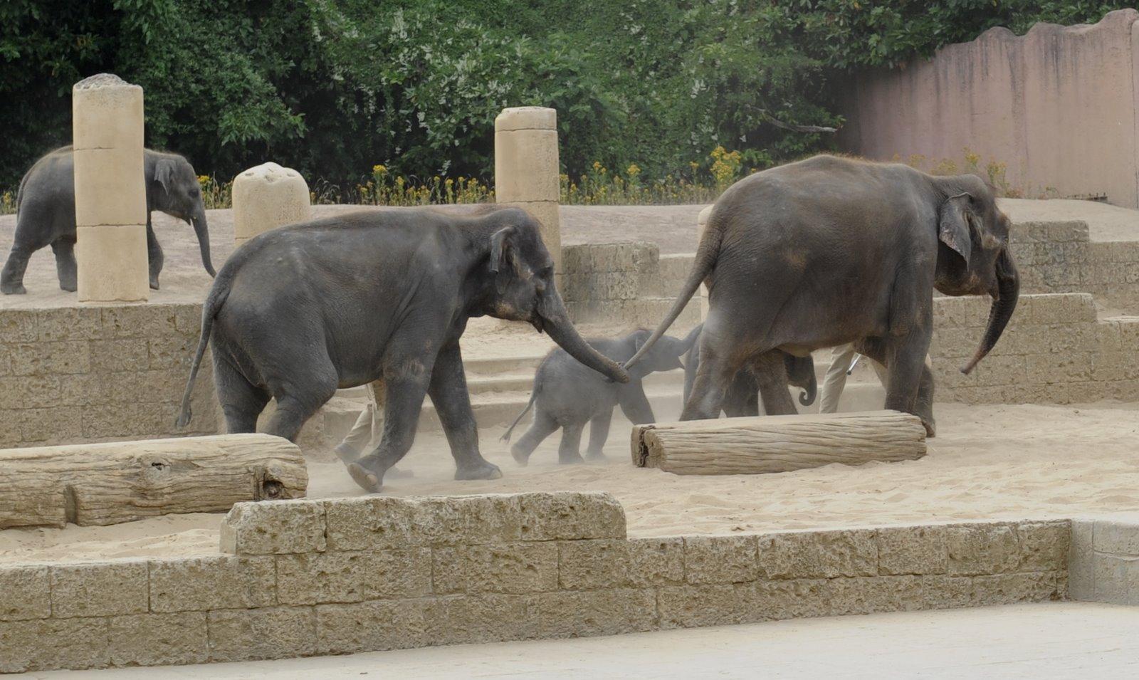 elefanten im zoo hannover jessis elefanten. Black Bedroom Furniture Sets. Home Design Ideas