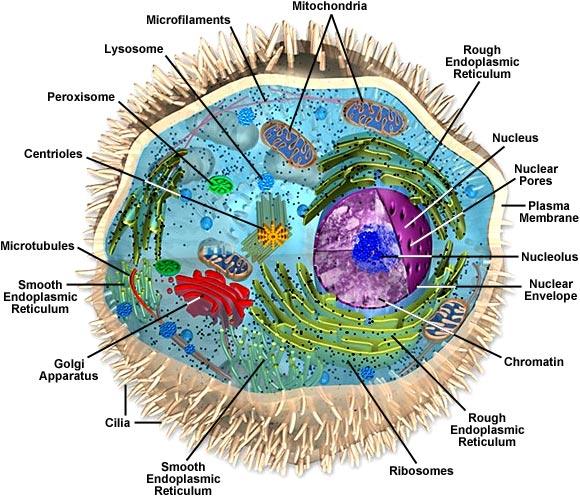 4th Grade Science: Animal Cells