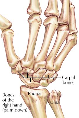 joints of the upper limb anatomy for msp