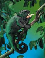 chameleon puppet folkmanis