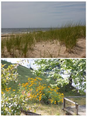 Dune grass and Black-Eyed Susans