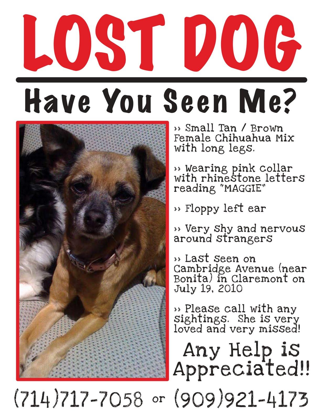 Claremont Insider Lost Dog