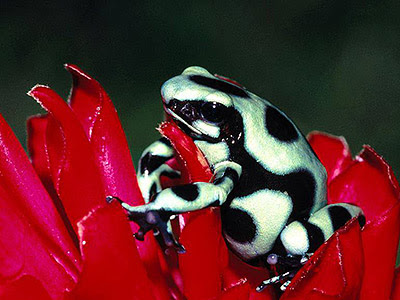 Black White Green Frog