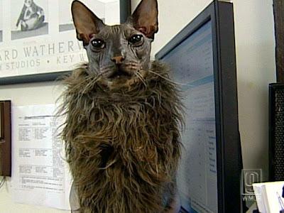 ugly_cat-3.jpg