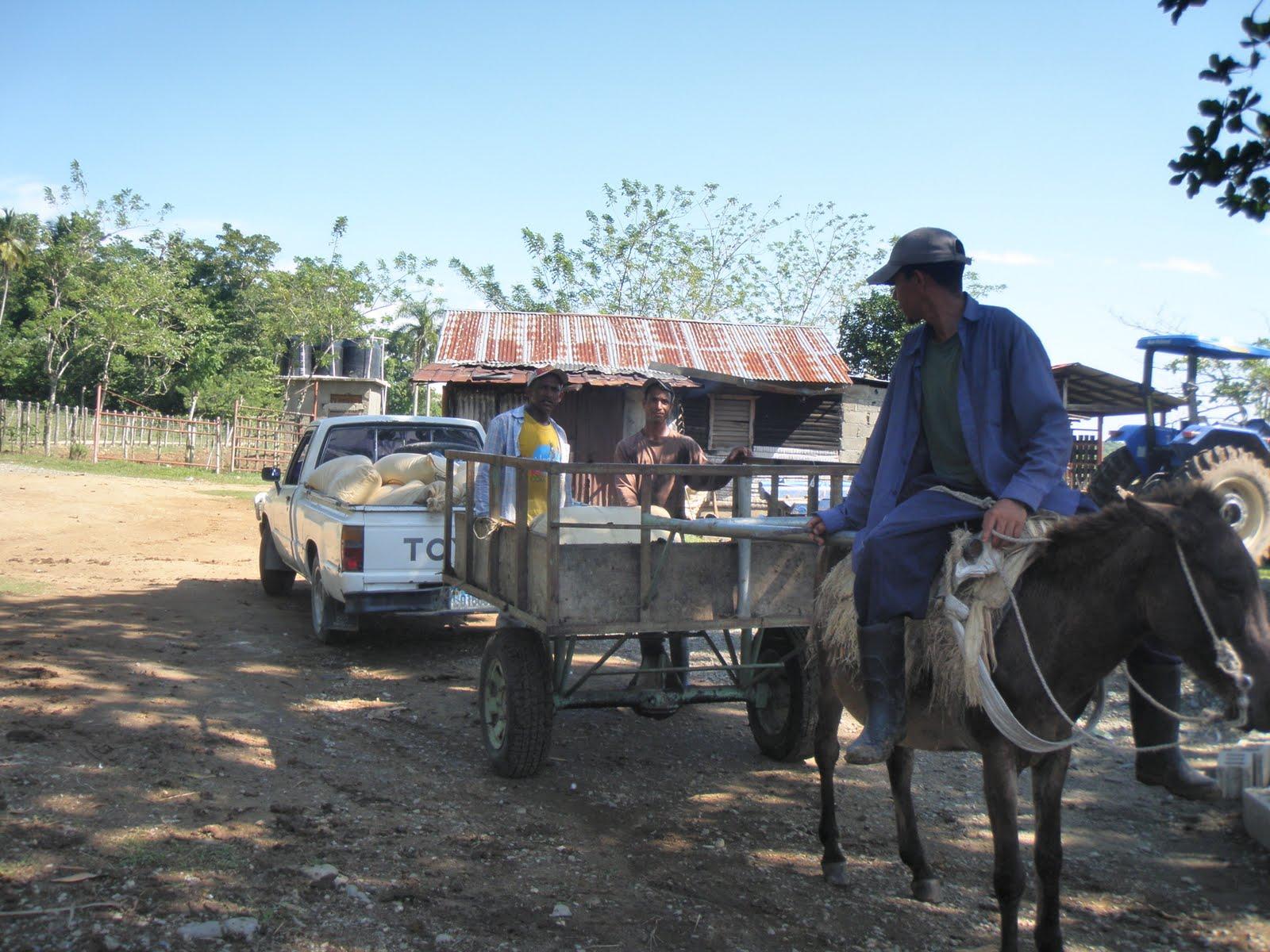 Los Campesinos para transportar su mercancía y hacer compra al por mayor 12ca7fe431d