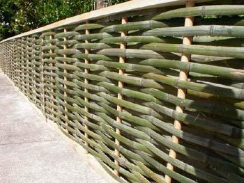 Woodland Bonsai Bamboo Part 1