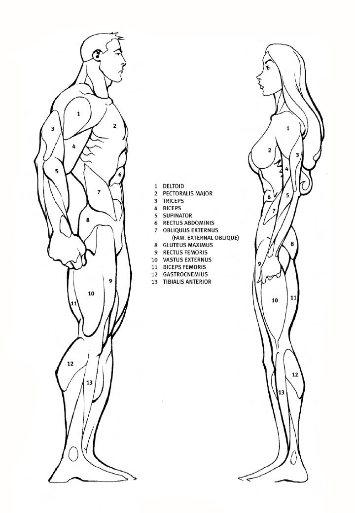 How to draw muscles in profile