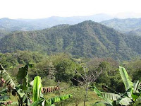 Puriscal forested hillside