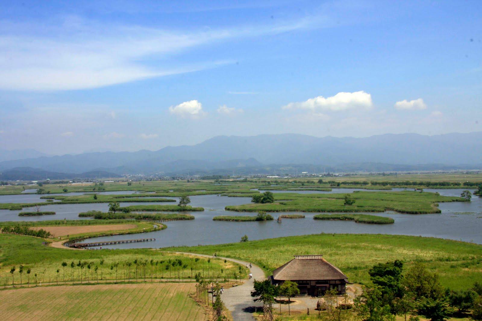 雪割草・(すいばら瓢湖): 水の公園 福島潟