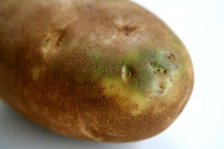 Photo of a green potato courtesy of Elise at Simply Recipes